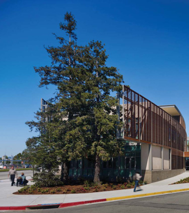 Southern view of campus with redwoods
